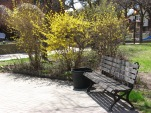 Our rear garden ... a beautiful place to take in the sun.